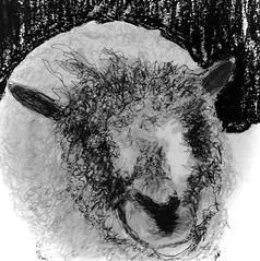 sheep (chartan) Tags: sheep pencil micronpen paper