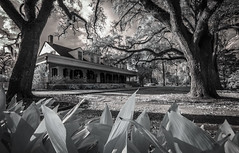 Myrtles Plantation (Rodney Harvey) Tags: myrtles plantation house louisiana infrared 1796 live oaks haunted spooky ghosts paranormal southern south antebellum history slavery