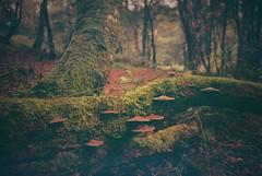 840 (a.pierre4840) Tags: olympus xa 35mm f28 lomography 800iso woodland fungi colorfilm colourfilm forest moss dof depthoffield vignetting fotor bokeh