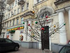Хто сказав, що це має бути ялинка? / Who says it should be a fir-tree? (ruta / рута) Tags: christmastree newyear oldnewyear tradition troughherlens