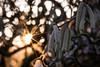 Warm Wintersun (henrik_thiele) Tags: sonnenstern strauch flora natur haselnuss star sun warm winter macro gegenlicht
