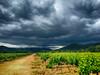 Ca gronde ... (GerardMarsol) Tags: france var sudest hyèreslespalmiers laclapière vignes rosédeprovence orage nuages soleil lumières souches raisins