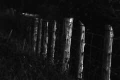 Fence Posts (pmvarsa) Tags: fall autumn 2017 analog film 35mm 135 ferrania ferraniap30alpha p30 panchromatic canon ftb classic camera nikonsupercoolscan9000ed nikon coolscan outside cans2s outdoors contrast farm rural agriculture fence posts depth depthoffield hawkesville ontario canada