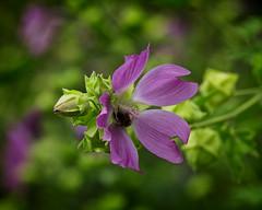 Pollen Search (MrBlueSky*) Tags: flower petal plant leaf garden horticulture nature outdoor colour london pentax pentaxart pentaxlife pentaxawards pentaxflickraward aficionados pentaxk5
