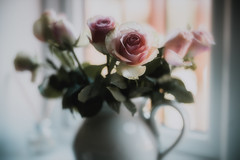 Pink...... (christilou1) Tags: leica m240 50mm summilux asph flowers blooms roses pink graceful soft pastel tribe lxcn