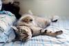 Bill the girl (Steve only) Tags: fujifilm xpro1 minolta mrokkorqf 12 f40mm 402 f2 40mm bill cats