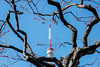 Plum Blossoms and Tokyo Tower (Rekishi no Tabi) Tags: umeblossoms ume shibapark shibakoen japan tokyo fujifilm tokyotower