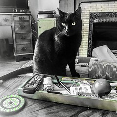 """Never let your sense of morals prevent you from doing what is right."" ―Isaac Asimov 🐈 (anokarina) Tags: appleiphone7 highlands louisville kentucky ky colorsplash psmobile adobephotoshopexpress green teal yellow gold cat kitten kitty pet animal blackcat"