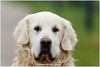 Boy (Hetwie) Tags: brouwhuis boy dog hond vijver pet wijkpark dier kanaal animal helmond noordbrabant nederland nl