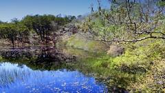 (mahler9) Tags: provincelands capecod may 2014 jaym pond blackwater reflection