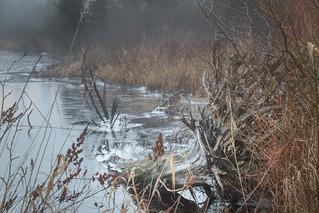 Fallen tree submerged in frozen lake