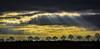 Sunlight (K&S-Fotografie) Tags: strahlen allee tres light sky sinlight clouds trip himmel gras baum landschaft