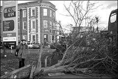 The Dangers of Shopping - DSCF9514a (normko) Tags: london west sainsburys supermarket ladbroke grove fallen tree storm wind