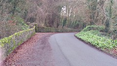 Country Lane Pics((22/01/2018)) (kent louugh) Tags: tipperary ireland giantsgrave wildelife water webs russel river robins trees outdoors fish outside pond shrubs streams dog deer ducks gulls jenny country clonmel clouds bees birds marlfield waterhens swans lake lane geese walk paths leafs stream sky stork