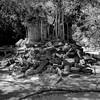 keep off the stones (daniel_james) Tags: 2018 canon6d canon1635mm cambodia kambodscha angkor bengmealea ruins forest blackandwhite square roots destruction temple tree southeastasia khmer