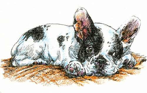 French Bulldog-Zensations Technical Pen, Sarasa Fineliners on a Hahnemühle Watercolor Postcard