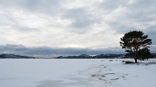 Ålefjærfjorden