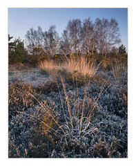 Iping Common (Sean D H Lewis) Tags: iping common frost sunrise heather sussex