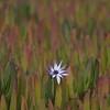 Lonely flower (senza senso) Tags: cyprus paphos flower darktable dof bokeh