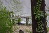 I Got Dem January Elk River Blues (BKHagar *Kim*) Tags: bkhagar river view elkriver green cane bamboo dock water ivy limestonecounty athens al alabama backyard home riversong