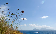 Flowers - Gulf of Naples (awolivet) Tags: color d300s nikon flowers italy nature blue water gulf naples capri ocean mediterranean sea sky boat island europe