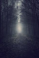 Where is the little girl? (PixTuner) Tags: baum bäume tree forrest mood düster dark horror weg way fog mist misty art pixtuner dunst wood woods