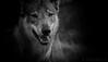 le bonheur est dans le pré... (Pilouchy) Tags: bonheur blackandwhite eyes lumiere monochrome animal wild nature portrait regard chemin
