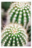 Sonoran Desert (pratyush-pandya.com) Tags: desert cactus green arizona a7r2 sony southwest voigtlander voigtländer macro macrophotography nature naturephotography outdoor