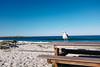 (thekevinchang) Tags: california seagull bird bench table picnic beach sand spanish bay spanishbay monterey