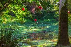 Idyllic Lily Pond (buffdawgus) Tags: lightroom6 hawaii waimeafallspark landscape hawaiianflora canonef24105mmf4lisusm waimeabotanicalpreserve hawaiianislands lilypads topazsw oahu lilypadpond oahunorthshore canon5dmarkiii waimeavalley