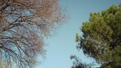 Deciduous & evergreen (Elvis L.) Tags: deciduous evergreen tree sky zadar dalmatia croatia park wallpaper background
