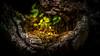 Parc du Marquenterre (guardians 83) Tags: vert philippeevrard philippe evrard nikon d800e baie de somme crotoy parc du marquenterre couche soleil sunset