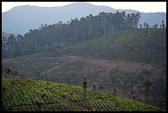 Early in the morning (Indianature st2i) Tags: earlymorning valparai anamalais anamallais anamalaitigerreserve westernghats tea shola rainforest nature indianature 2018 january february tamilnadu india life wildlife plantation forest people estate