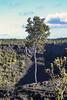 ʻŌhiʻa Tree on the Rim of Pauahi Crater (wyojones) Tags: hawaii hawaiivolcanoesnationalpark pauahicrater eruption basalt ʻōhiʻa tree rim crater