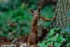 Jean-Luc Wolf_2017-10-17_15-48-39 (Jean-Luc Wolf) Tags: ecureuil mammiferes parcdesceaux parcdesceaux17102017 sceaux antony îledefrance france fr