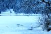 Alleghe. Swan Lake. expl. (ennios2000) Tags: snow winter frost neve paesaggio alleghe swan lake swanlake light tree sky dolomitibellunesi