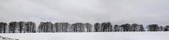 TREE LINE (EXPLORED 15/01/2018) (mark_rutley) Tags: meon meonvalley winter snow warnford trees panorama explored explore