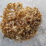 Hydrangea on ice - Hortensia sur glace thumbnail