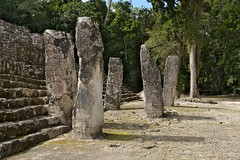 Mayan Stelae, Calakmul, SE Mexico (elhawk) Tags: mexico campeche maya mayanruins temple calakmul pyramid standingstones stelae