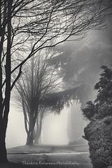 The Way you Look Tonight (Theodora Kalavesis) Tags: mist fog foggy foggyatmosphere atmosphere trees monochrome blackwhite bw bc britishcolumbia vancouver vancity vancouvercity canada landscape theodorakalavesis theodorakalavesisphotography