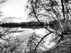 Het Rundedal (geert-smit) Tags: olympus blackwhite bw tree forrest landscape lake zwartwit landschap meer water boom bos rundedal klazinaveen