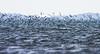 Dynamic Blues (AnyMotion) Tags: seagulls möwen birds bird vogel vögel water wasser lake see 2006 spekebay lakevictoria victoriasee africa afrika animals nature reisen tansania tanzania tiere wildlife travel anymotion landscape landschaft landschaftsaufnahmen