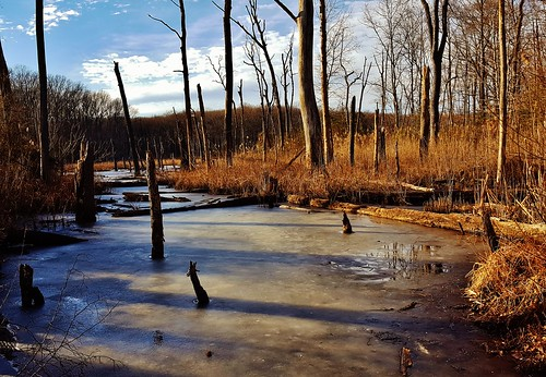 Black Marsh Winter Scene 2018