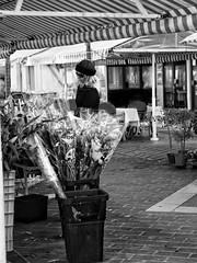 Which one ? (withnaomi) Tags: flowersmarket market flowers fleurs nice nissa courssaleya fr france paca cotedazur french frenchriviera ohcotedazur south southoffrance sud getolympus olympus olympuspen penepl7 epl7 mzuiko45 mzuiko45mm bnw bw wb nb noiretblanc blancetnoir blackandwhite monochrome monochrom monochromatic reflectionstories