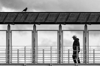 Man and Crow