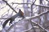Squirrel (Pokedex!~by Photo team H&A~) Tags: squirrel japan hokkaido 札幌 sapporo 北海道 エゾリス animal wild pentax k5 da300