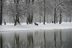 winterlab (Pixelkids) Tags: winter see winterlandschaft lussee bayern schnee bäume hund labrador explored 234 spiegelung