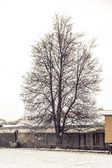 _Q9A4145 (gaujourfrancoise) Tags: belarus biélorussie gaujour landscapes paysages neige snow