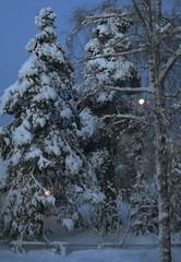 Full moon in my fluffy snowy garden. (evakongshavn) Tags: fullmoon supermoon winter snow snowy snowfall garden tree trees white light goodmorning goodmorningworld fence moon sky nature blue landscape paysage 7dwf
