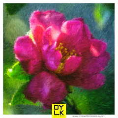 20180216_IMG_7461_impressionist (Cristian Ferronato) Tags: 2018 eos750d fiori macro doyoulikemyphoto doyoulikemyart dylk flower digitalpaint digitalart art paint